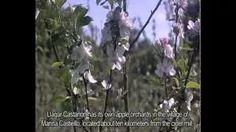 Sidra Castañón - YouTube