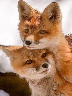 Companions Photo by John Dykstra