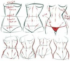 #Anatomytutorial
