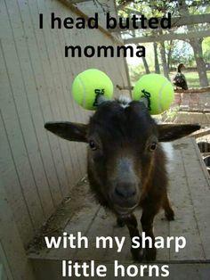 HAHAHAHA!!!! This makes me laugh!!
