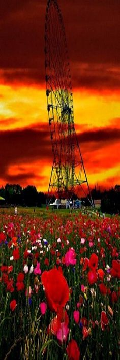 Poppy Field Ferris Wheel, Japan