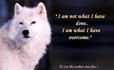 """From """" Let The Wolves Run Free"""""""