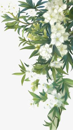 White blooming flowers and green leaves, Green Leaves, Leaf, White PNG and PSD Flower Backgrounds, Flower Wallpaper, Wallpaper Backgrounds, Iphone Wallpaper, Wallpapers Verdes, Cute Wallpapers, Watercolor Background, Watercolor Flowers, Watercolor Art