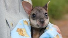 kangaroo Baby http://ift.tt/2oGoPU9