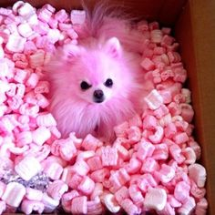 pink puppy...to cute for words!