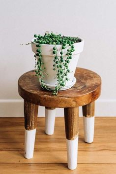 11 Best Indoor Vines And Climbers You Can Grow Easily In Your Home Love growing plants indoors? Some of the best indoor vines and climbers that are easy to grow listed here. Must check out! Planting Succulents, Garden Plants, House Plants, Indoor Succulents, Garden Web, Balcony Garden, Succulent Plants, Easy Plants To Grow, Growing Plants Indoors
