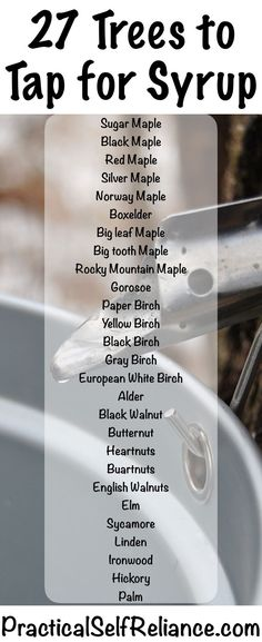 27 Trees You Can Tap for Syrup that you probably didn't know make edible free syrup. Use the syrup as a natural sugar replacement in your favorite food. Walk into any gift shop in Vermont and you'll find shelves of maple syrup, alongside Black Walnut Tree, Self Reliance, Wild Edibles, Edible Plants, Survival Tips, Survival Skills, Homestead Survival, Homestead Farm, Survival Quotes