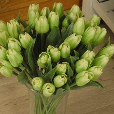 umelé tulipány francúzske - Hľadať Googlom