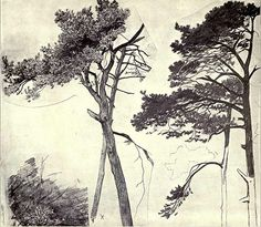 File:Hubert von Herkomer 1863 - Firs 'drawn from nature at the age of fourteen' (The Herkomers - Wikimedia Commons Tinta China, Artist Journal, Landscape Drawings, Amazing Drawings, Art Sketchbook, Illustration Art, Illustrations, Drawing Sketches, Photo Art