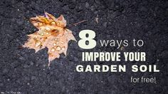 Gardening doesn't have to be expensive. Improve your garden soil with these 8 amendments that are totally free and have your best garden yet!