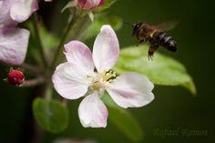 ...flor de cerezo... by Rafael Ramos Fenoy on 500px