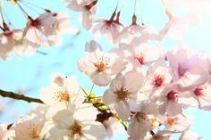 Bürohündin Bluna bloggt: Habt ihr es schon gerochen? Der Frühling kommt! Heute habe ich beim Gassi gehen in der Mittagspause die ersten Schneeglöckchen ausgebuddelt.