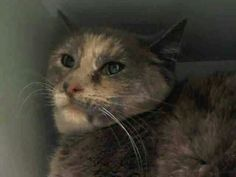 Save this girl Sway.needs rescue URGENT from ACC shelter in New York City URGENT visit pets on death row on Facebook. They will kill her tomorrow.