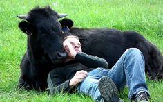 Increible, mira lo que es capaz de hacer este Toro... #fotozoo #kikecadena #fotografodemascotas