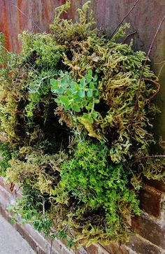 30  Herb Garden IdeasLeave it to Kari over at Thistlewood farms  to come up with an herb garden with her special spin on it... A Living Herb Wreath  Kari gives you step by step directions to make your own.