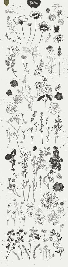 Rustic nature planner doodles and bullet journal decoration ideas. – Anna Rustic nature planner doodles and bullet journal decoration ideas. Rustic nature planner doodles and bullet journal decoration ideas. Art Floral, Motif Floral, Floral Patterns, Flower Graphic, Flower Tattoos, Small Tattoos, Tattoo Drawings, Art Drawings, Tattoo Sketches