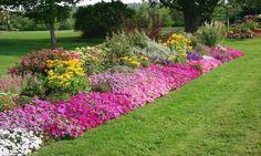 Velký zahradní seriál - zahrada krok za krokem 9 | Magazín zahrada