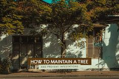 If we want to reap all the benefits that mature trees provide, it's important to know how to maintain a tree and prevent infestations. Keeping Healthy, The Neighbourhood, Trees, Yard, Facts, The Neighborhood, Patio, Tree Structure, Courtyards