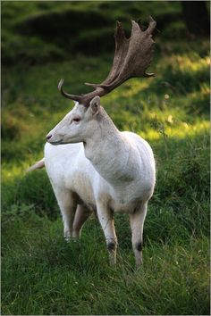 Do you love the idea that magical creatures are real? Take this quiz and find out which magical creature you are! Weird Creatures, Magical Creatures, Beautiful Creatures, Fantasy Creatures, Rare Albino Animals, Fallow Deer, Nature Posters, Animal Totems, Woodland Creatures