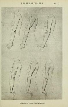 Nouvelle anatomie artistique du corps humain ..