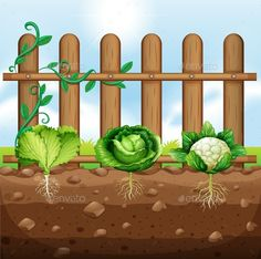 Set Of Vegetable Crops – Rooftop Garden