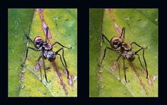 Spider: cross view 3D | Flickr - Photo Sharing!