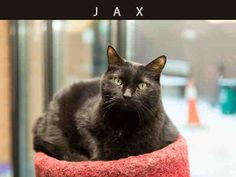 Jax (A667417) at Toronto Animal Services