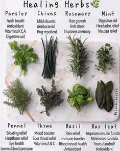 Nothing beats natural healing. The cure for every dis-ease and illness is already in nature. Just reprogram your… by healing herbs on medicinal plants Healing Herbs, Medicinal Plants, Natural Healing, Healing Spells, Herbal Plants, Crystal Healing, Herbal Remedies, Home Remedies, Natural Remedies
