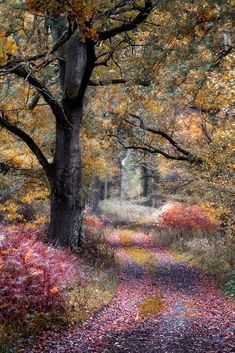Autumn Lane by Mark Jones / 500px