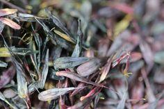 woad seeds