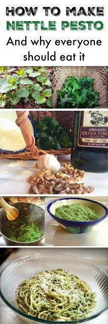 Marblemount Homestead: How to make nettle pesto, and why everyone should eat it