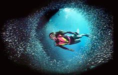 Learn to dive (or get your PADI scuba certification) in Montreal with Total Diver Costa Maya, Learn To Scuba Dive, Scuba Certification, Road Trip, Sea Diving, Cave Diving, Australia, Underwater World, Underwater Photos