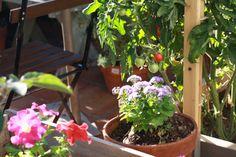 garden too