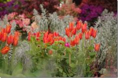 The Chelsea Flower Show 2014 As a regular exhibitor at Chelsea Flower show for over 25 years I have a good idea of how to get the best from the Show. Whenever I talk about Chelsea people tell me how much they would love to go, but can't face the...