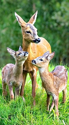 Momma with her babies.