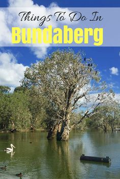 Bundaberg is known as the southern gateway to the Great Barrier Reef therefore gets lots of people passing through the city. Yet, it could be worth staying a while depending on how many of these things to do in Bundaberg take your fancy