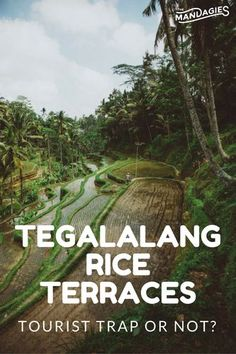 The Tegalalang Rice Terraces are a HUGE tourist attraction in Bali, Indonesia. Is it worth your time to check it out? Click the link for advice on visiting Ubud and ultimate travel tips!