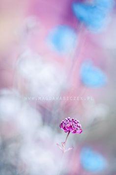 Something sweet by Magda Wasiczek