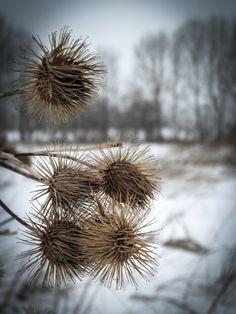 winter impressionen no 2