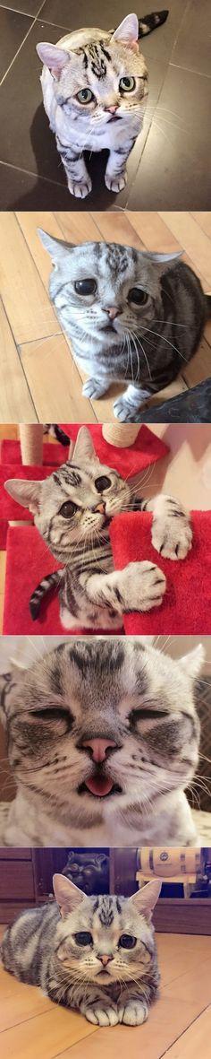 Самая грустная кошка по имени Луху.