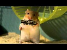 hamster jazz band! too cute!