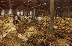 Tobacco auction, Moultrie, Georgia.