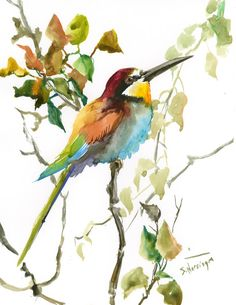 European Bee Eater, 14 X 11 in, original watercolor painting, birds fo Europe, Birds of Asia bird art bird painting