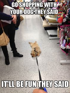 """Going shopping with your dog they said…  It'll be fun they said."" ~ Dog Shaming shame - This has never happened with MY DOGS!"