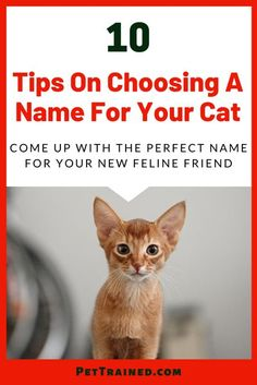 Looking for tips on choosing a name for your cat? When you bring home your new cat, the next task will be to give it a suitable name. A cat name is an identity for life and you need to choose a… More Grey Cat Names, Cute Cat Names, Kitten Names, Grey Cats, White Cats, Pet Names, Cool Names, Old Cats, Cats And Kittens