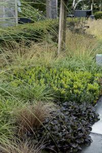 Plantes couvre-sol (cotonéaster, sedum...) (Fiches conseils)