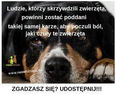 Dog Quotes, I Love You, Motivation, Friends, Dogs, Madonna, Animals, Animal Pictures, Historia