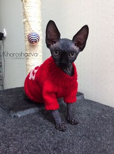Kitten's Hand Knitted Cozy Sweater Princess, Knit Jumper With Embroidered Crown For Sphynx, Hand knitted Cat or Small Dog Sweater Pullover Small Dog Sweaters, Cozy Sweaters, Sweater Knitting Patterns, Hand Knitting, Sphynx Cat Clothes, Knitted Cat, Kittens, Cats, Handmade Shop