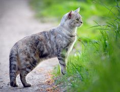 Falmer Farm Cat