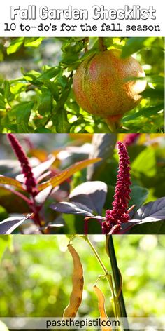 Get ready for fall, soak up the season and make the most of your garden. Grow What You Love.